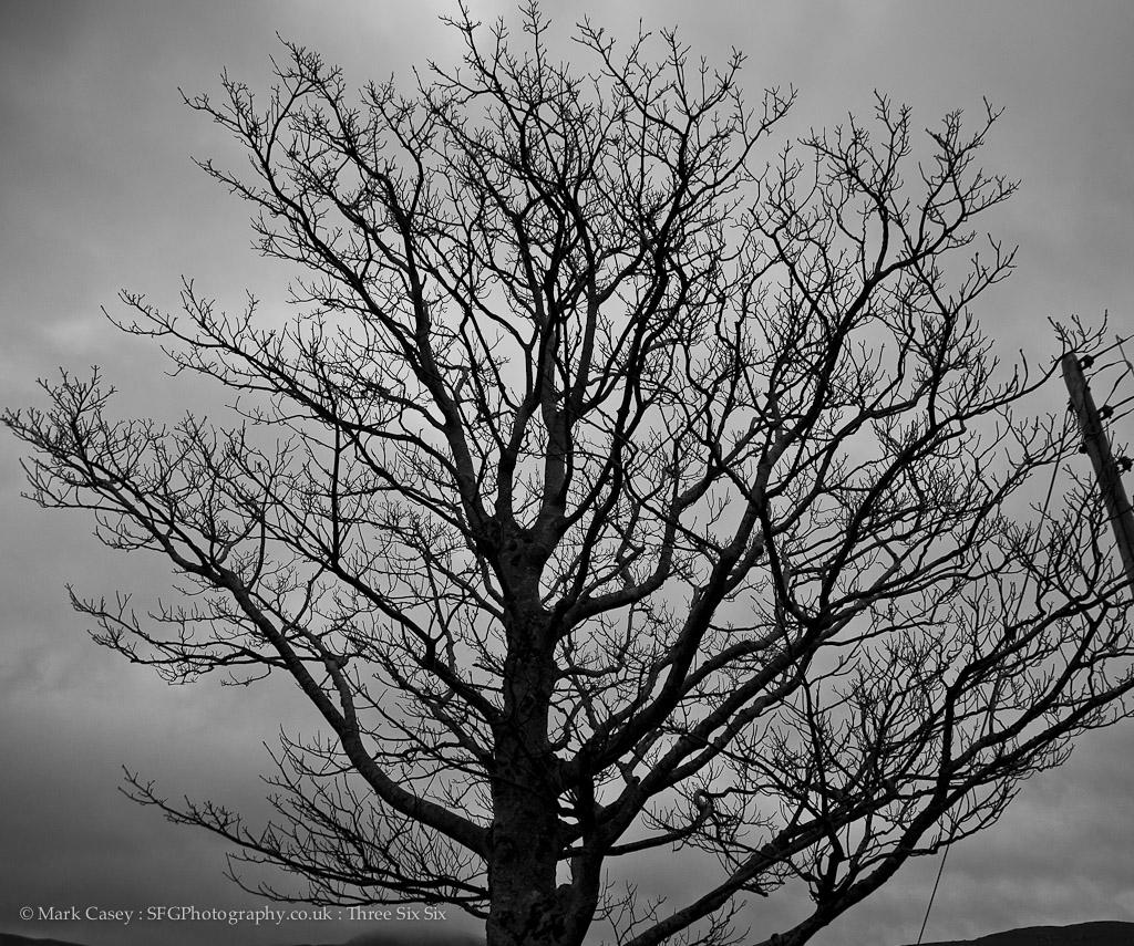 366-177 - Naked Tree