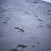366-170 - Footprints