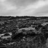 366-174 - Barren Landscape