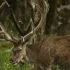 366-138 - Red Deer