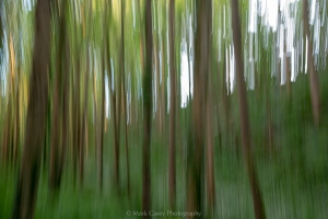 Impressions of Trees