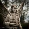 angel-022