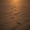Castlerock Sunrise 014