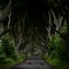 Dark Hedges - Green