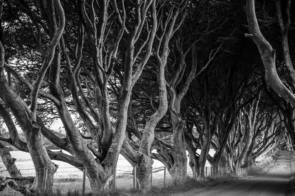dark-hedges-002