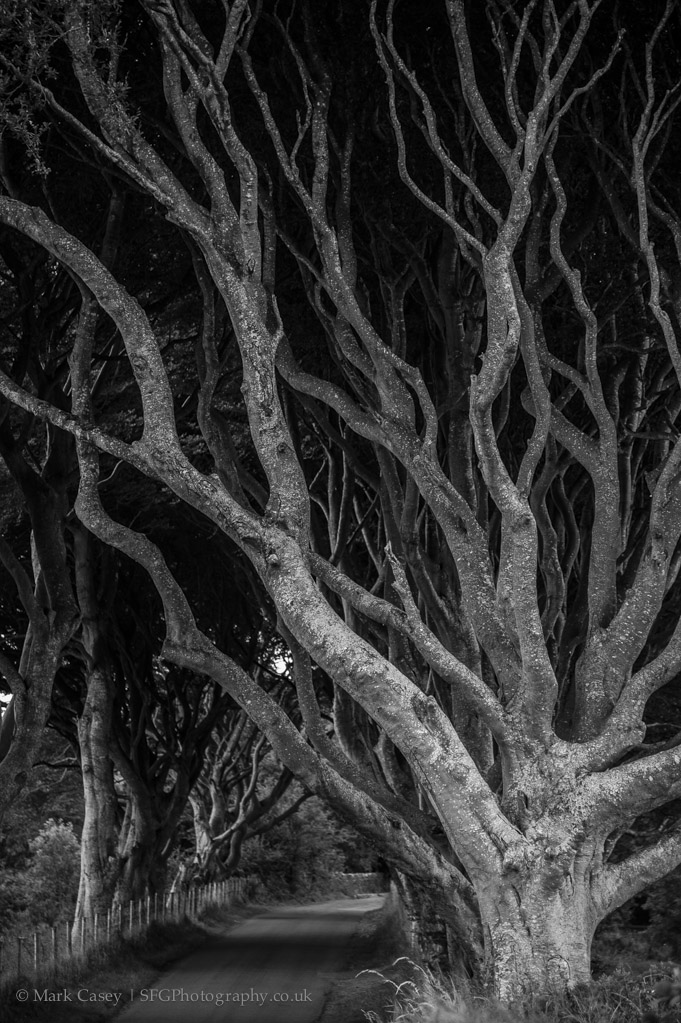 dark-hedges-005