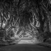 dark-hedges-001