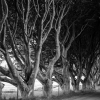 dark-hedges-002