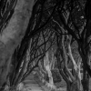 dark-hedges-003