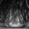 dark-hedges-004