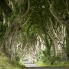dark-hedges-006