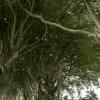 dark-hedges-008