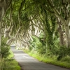 dark-hedges-009