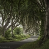 dark-hedges-010