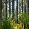 Sleeping Ferns