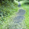 Downhill 016