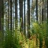 Sleeping-Ferns