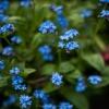 Little Blue Flower
